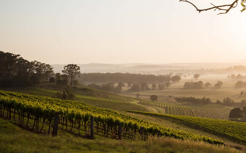 Hunter Valley Sydney Tourism