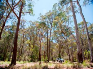 Coolah Tops National Park Camping - Sydney Tourism