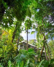 Daintree Eco Lodge and Spa - Sydney Tourism