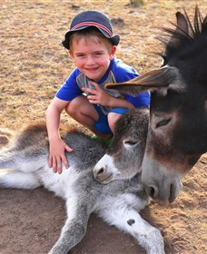 Destiny Boonah ECO Cottages and Donkey Farm - Sydney Tourism