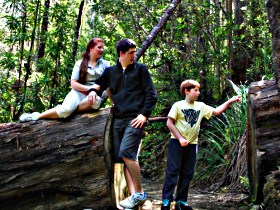 Tahune Airwalk Lodge - Sydney Tourism