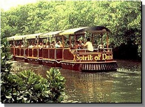 Daintree Rainforest River Trains - Sydney Tourism