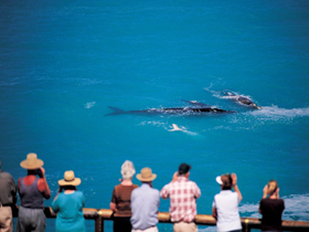 Whale Watching At Head Of Bight - Sydney Tourism