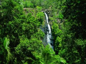 Kondalilla National Park - Sydney Tourism