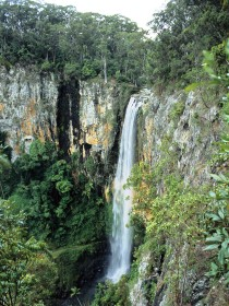 Gondwana Rainforests of Australia - Sydney Tourism