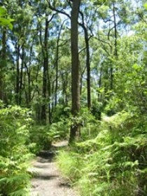 Mapleton Falls National Park - Sydney Tourism