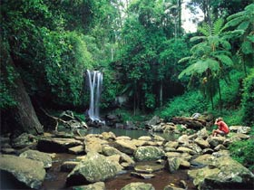 Tamborine National Park - Sydney Tourism