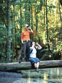 Birdwatching on the Fraser Coast - Sydney Tourism