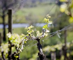 Norton Estate Wines - Sydney Tourism