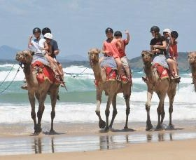 Camel Rides with Coffs Coast Camels - Sydney Tourism