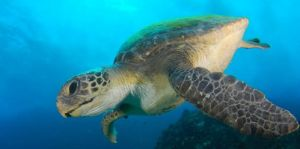 Byron Bay Dive Centre - Sydney Tourism