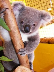 Cooberrie Park Wildlife Sanctuary - Sydney Tourism