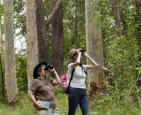 Chichester State Forest - Sydney Tourism