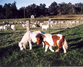 Trudgalong Farm - Sydney Tourism