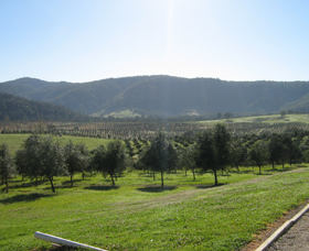 Hastings Valley Olives - Sydney Tourism