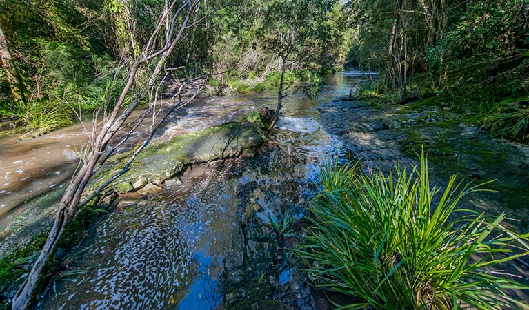 Dawson River walking track - Sydney Tourism