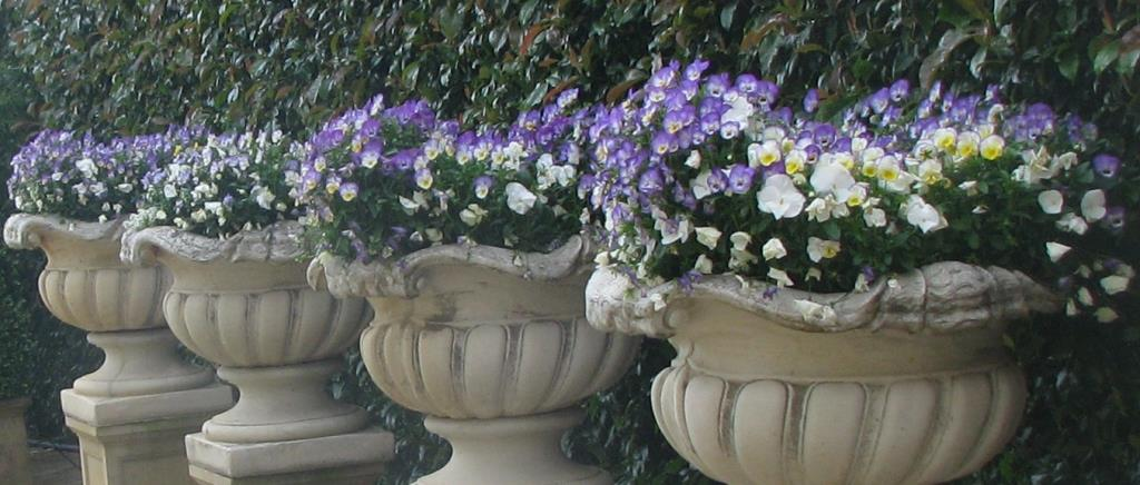 Gardenalia Open Garden and Rare Plant Nursery