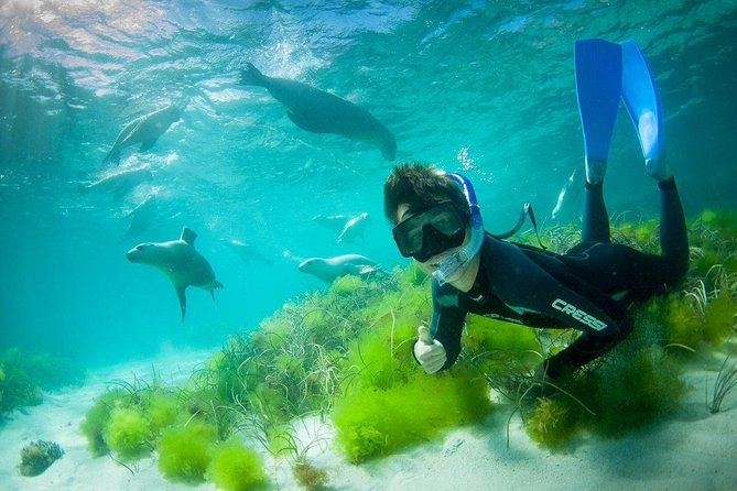 Half-Day Sea Lion Snorkeling Tour from Port Lincoln - Sydney Tourism