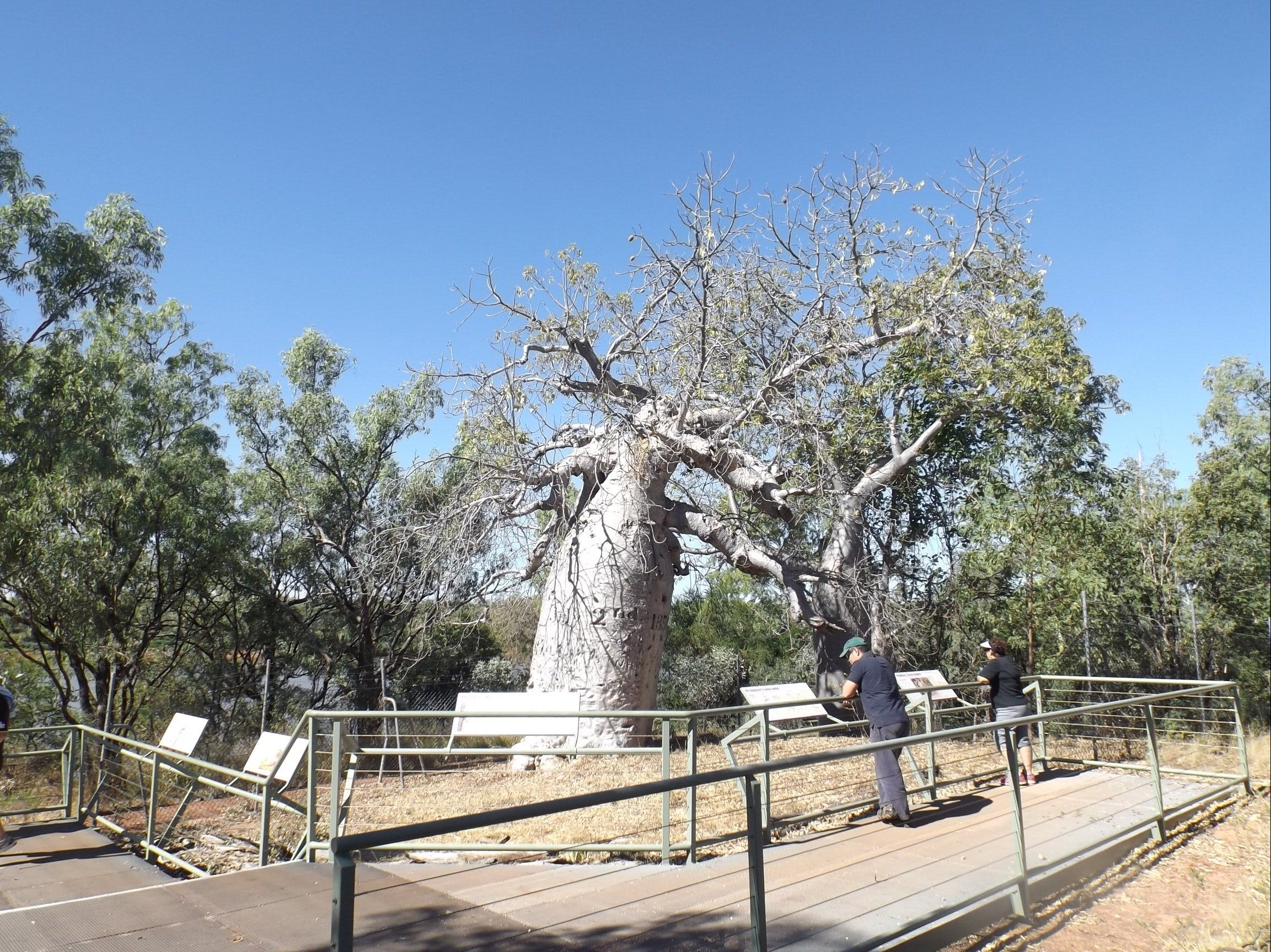 Gregory's Tree Timber Creek - Sydney Tourism