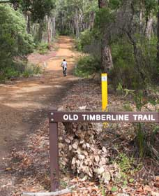 Old Timberline and Sidings Rail Trails - Sydney Tourism
