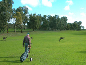 Coffin Bay Golf Club - Sydney Tourism