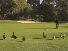 Royal Hobart Golf Club - Sydney Tourism