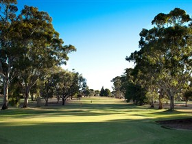 Loxton Golf Club - Sydney Tourism