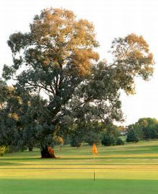 Cowra Golf Club - Sydney Tourism