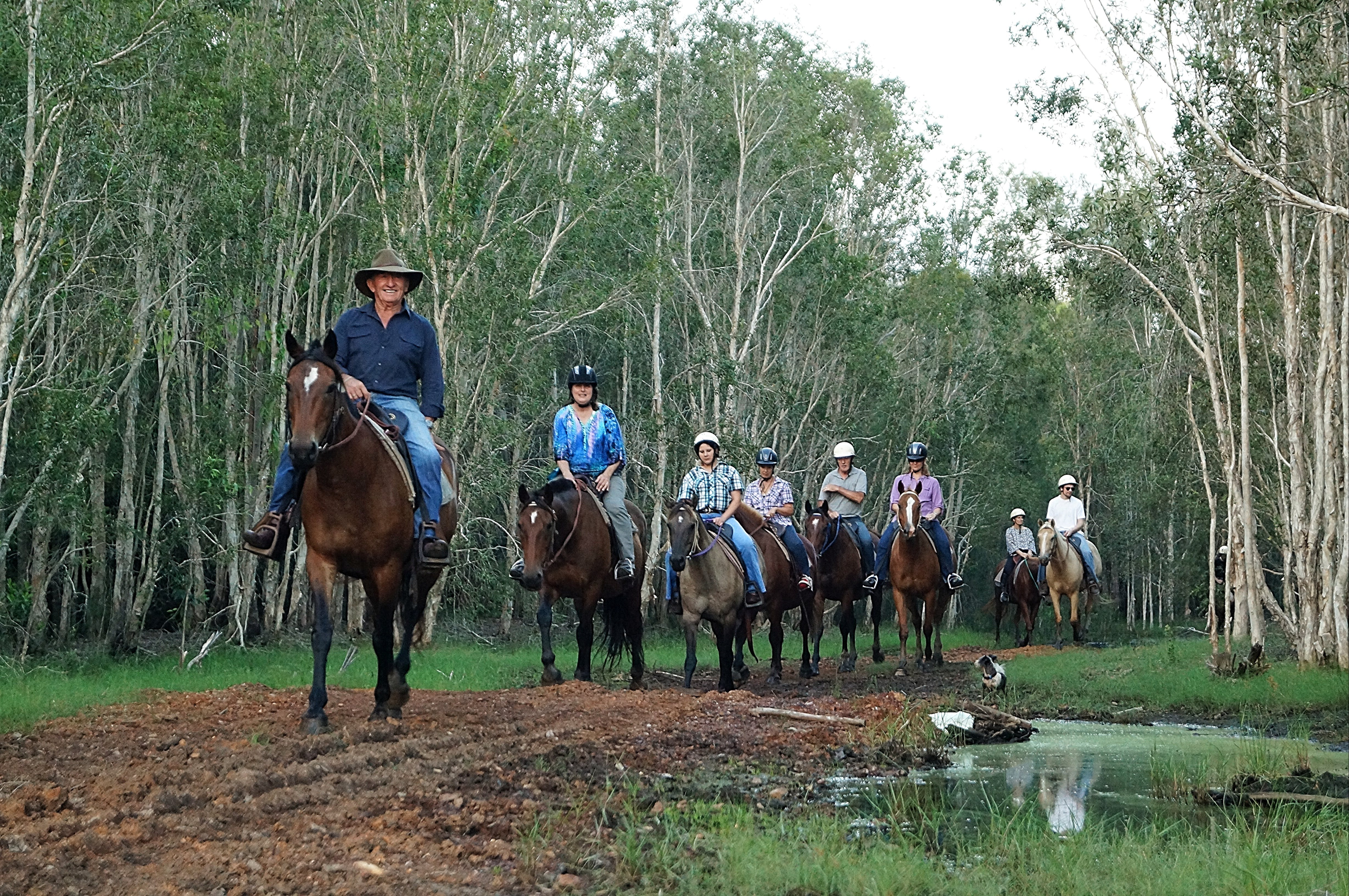 Night Horse Ride and Dinner - Sydney Tourism