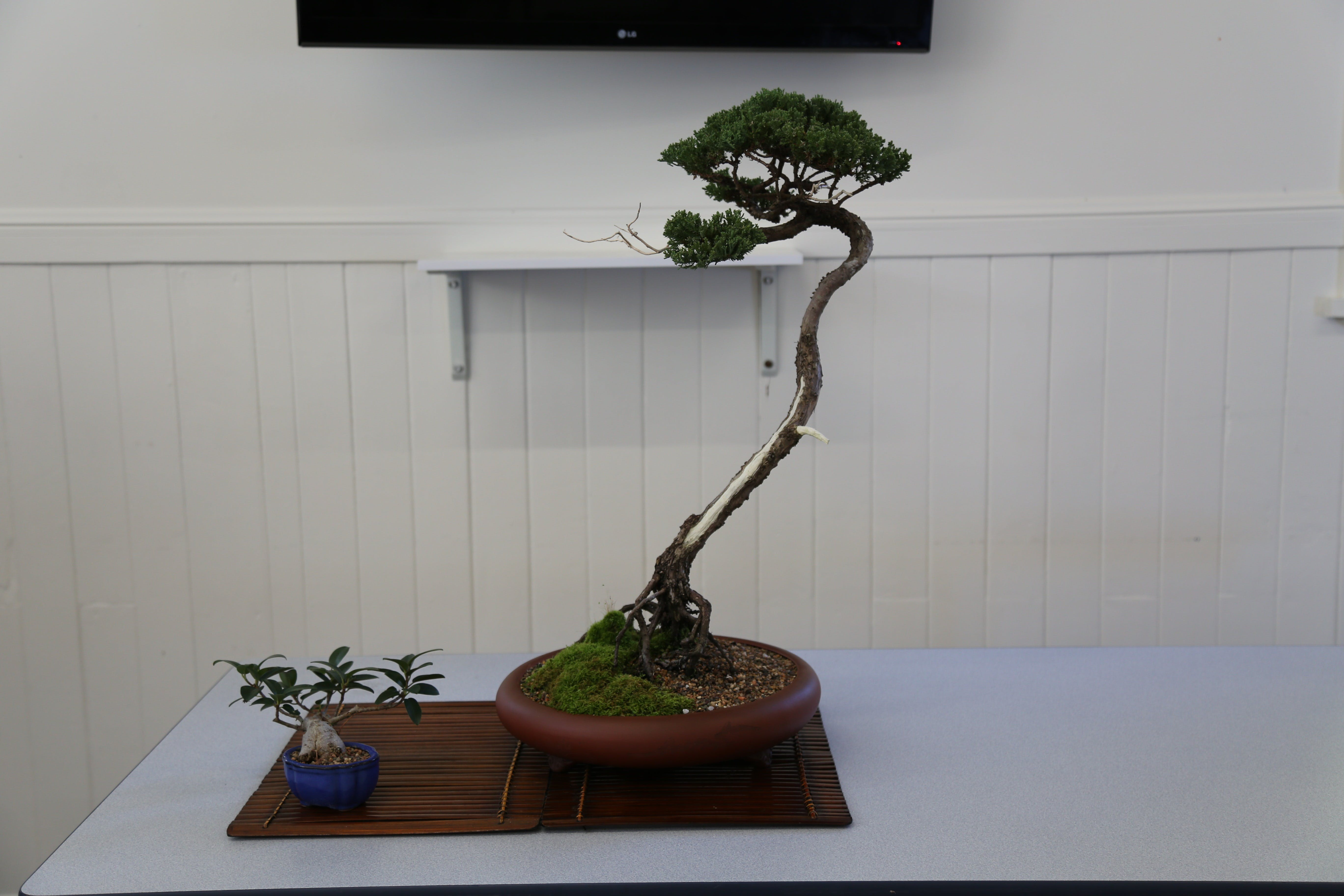 Wauchope Bonsai Workshop Group - Sydney Tourism