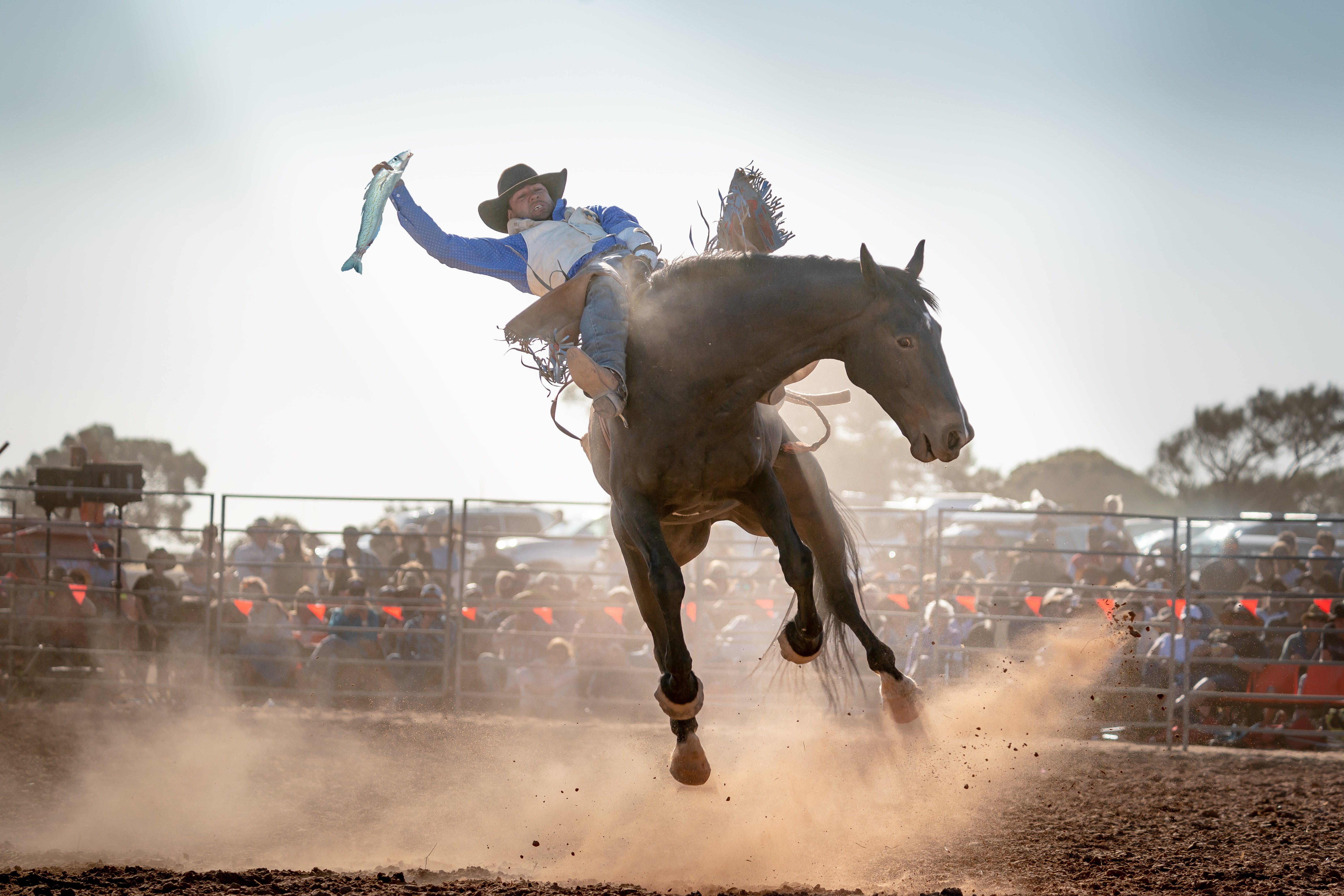 Rodeo by the Sea - Streaky Bay - Sydney Tourism