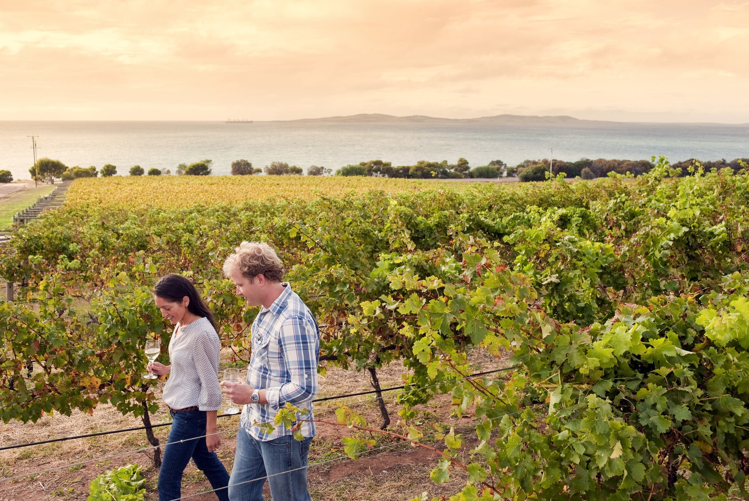 Boston Bay Wines - Sydney Tourism