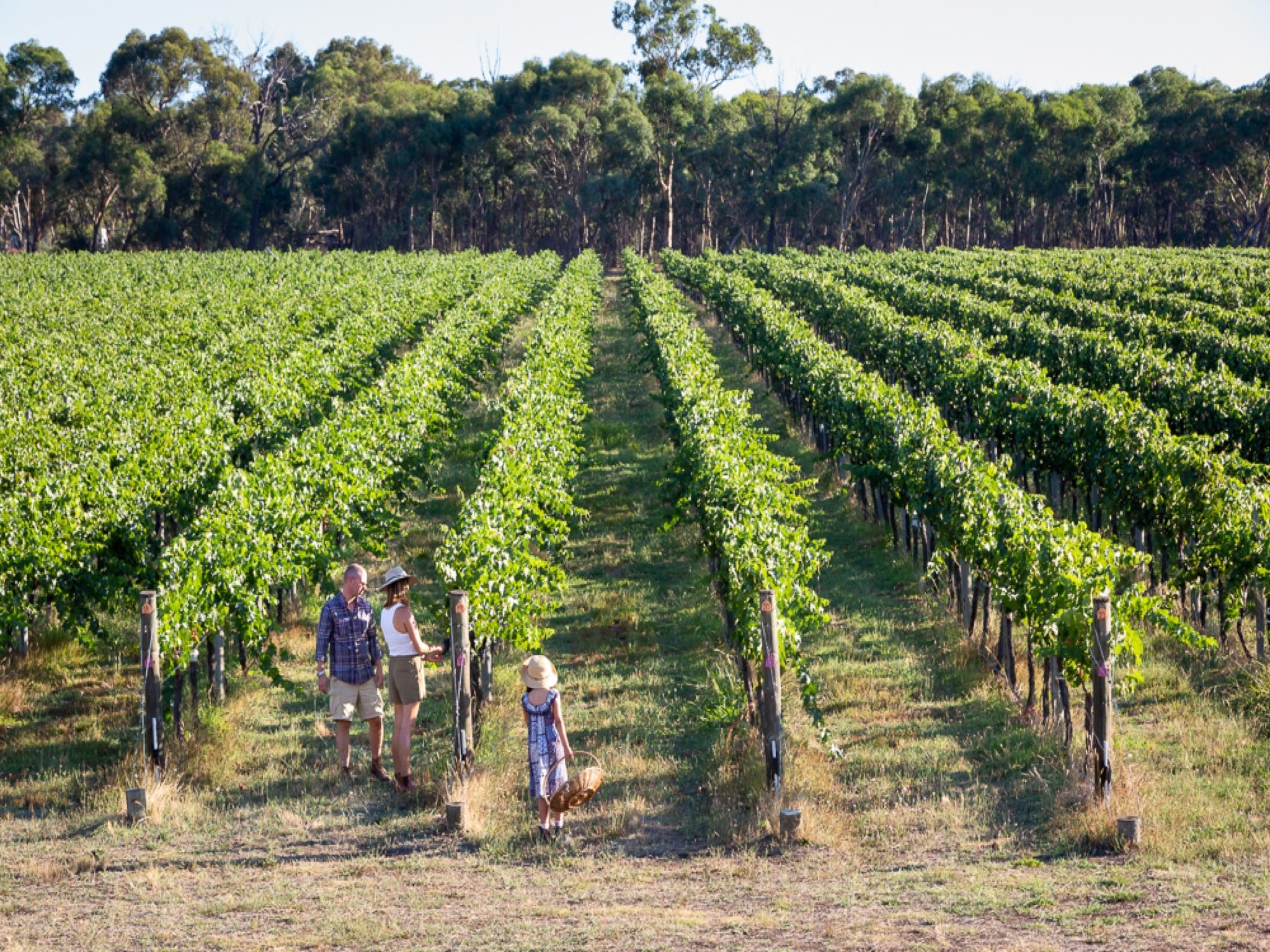 Weathercraft Wines - Sydney Tourism