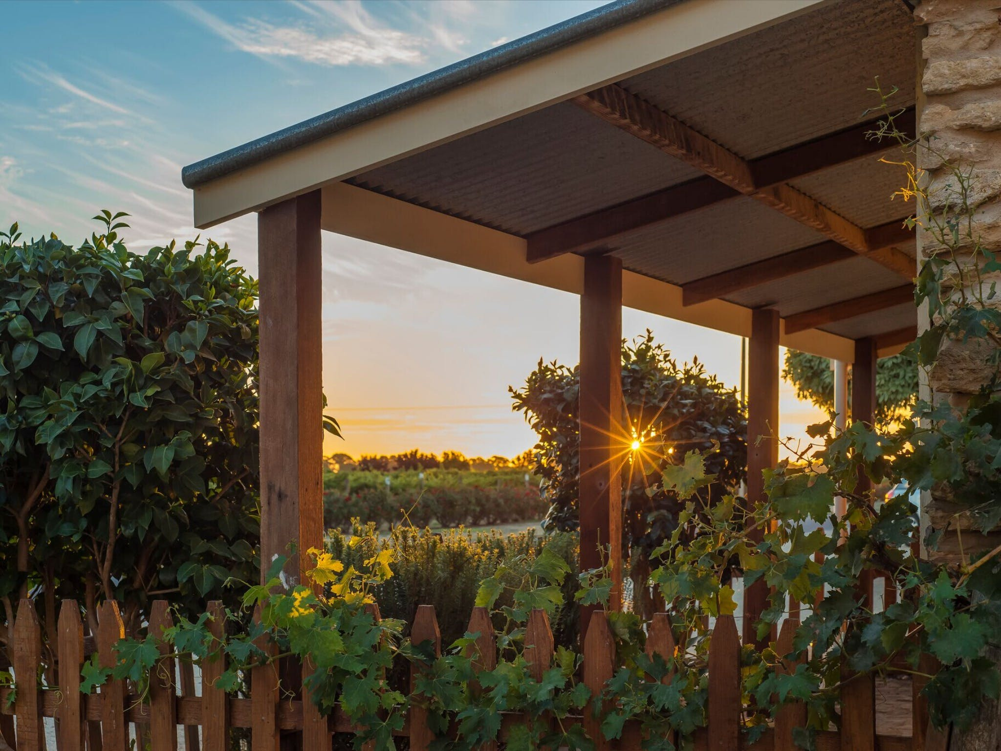 Caf in the Vines - Sydney Tourism