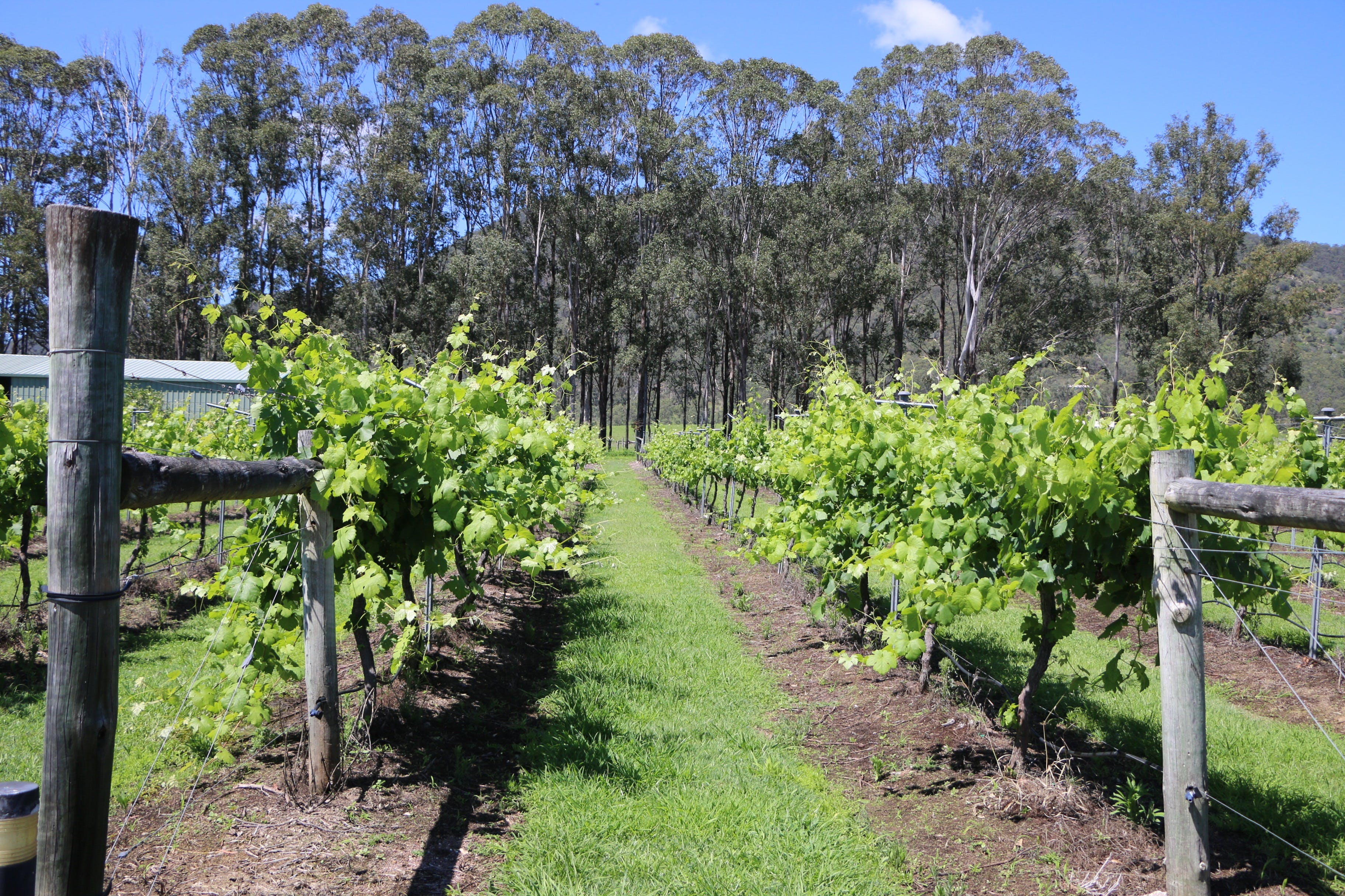 Woongooroo Estate Winery - Sydney Tourism