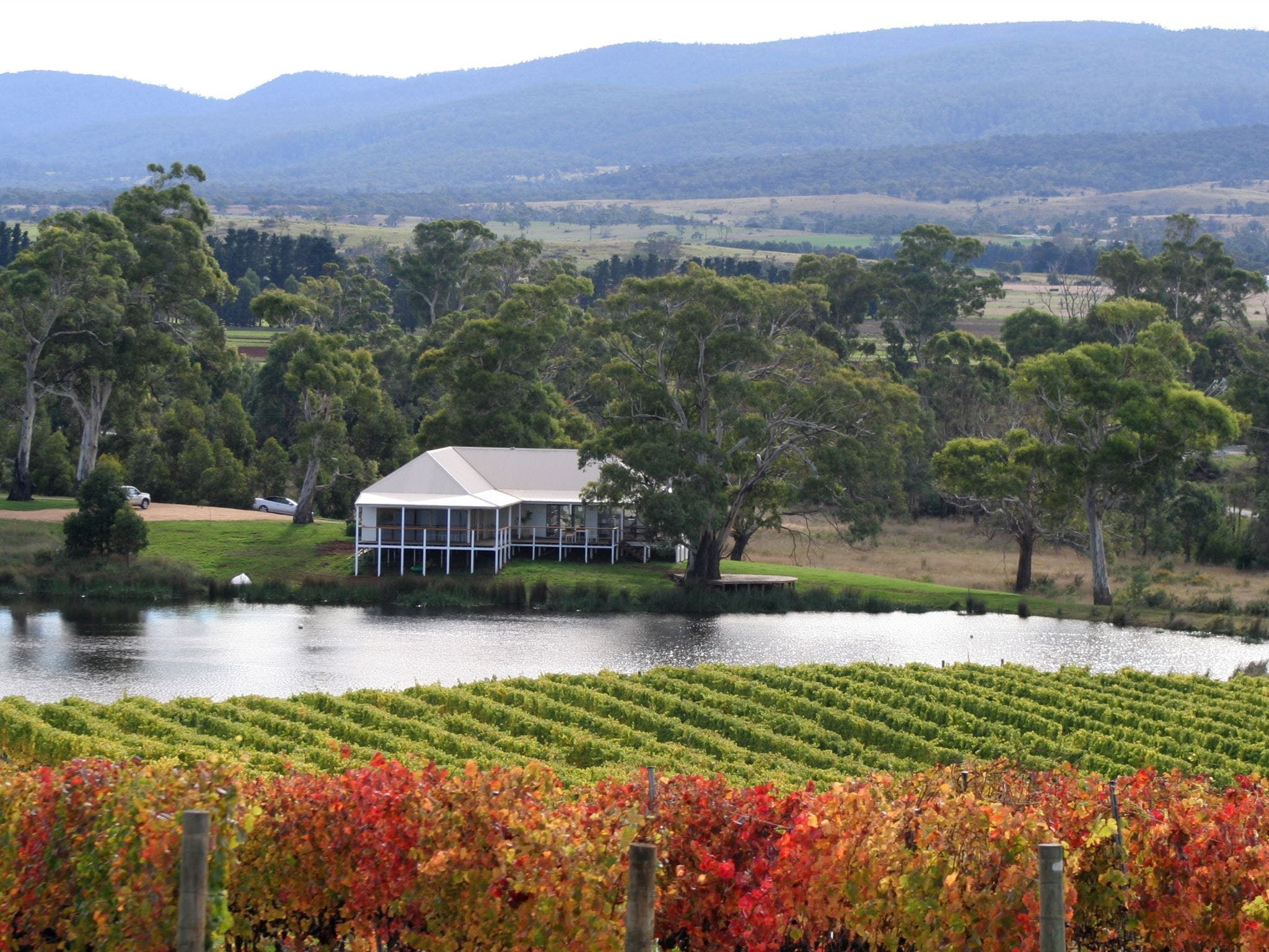Milton Vineyard - Sydney Tourism