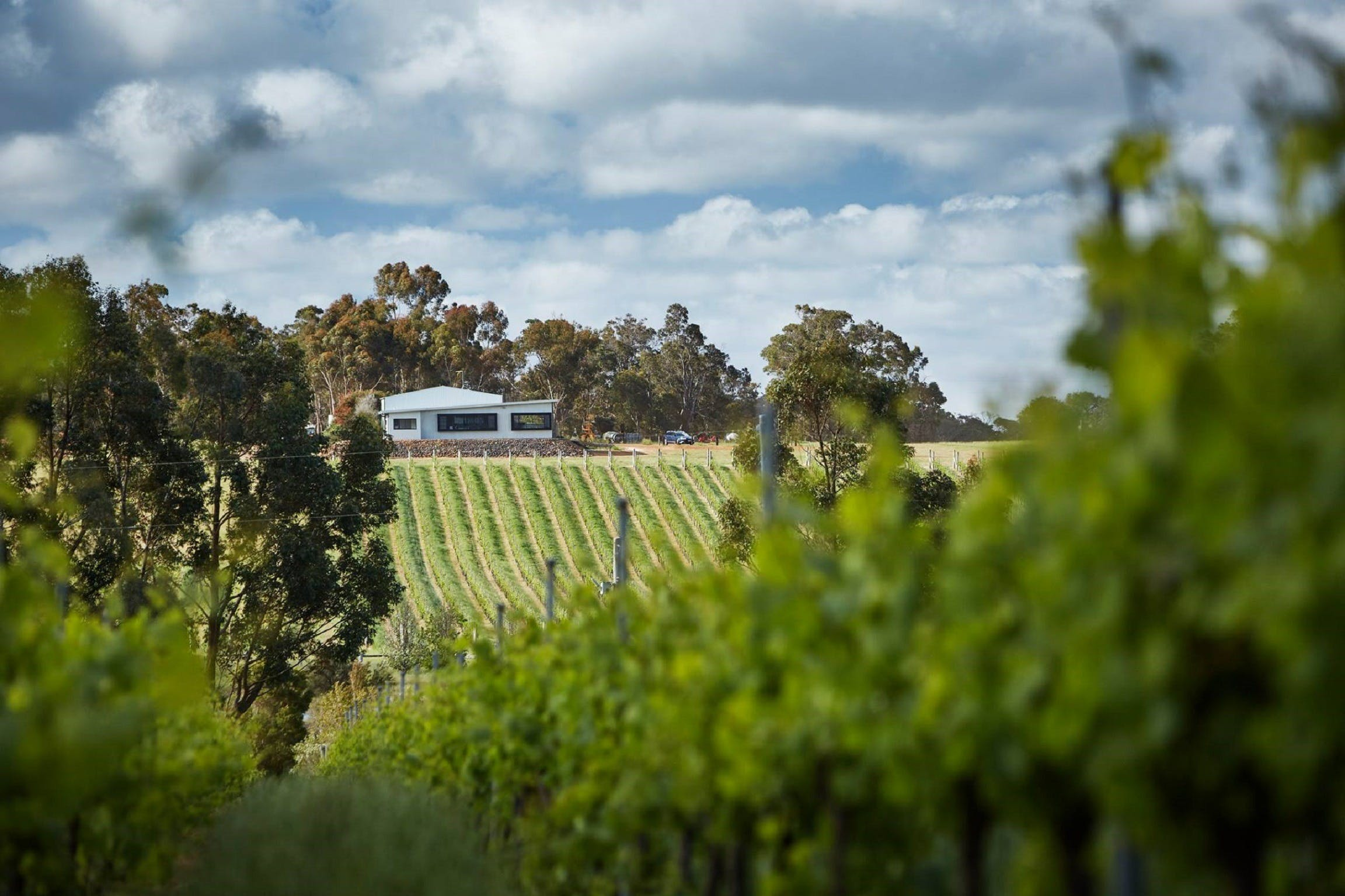Victory Point Wines - Sydney Tourism