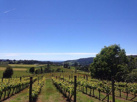 Barringwood Vineyard and Cellar Door Restaurant - Sydney Tourism