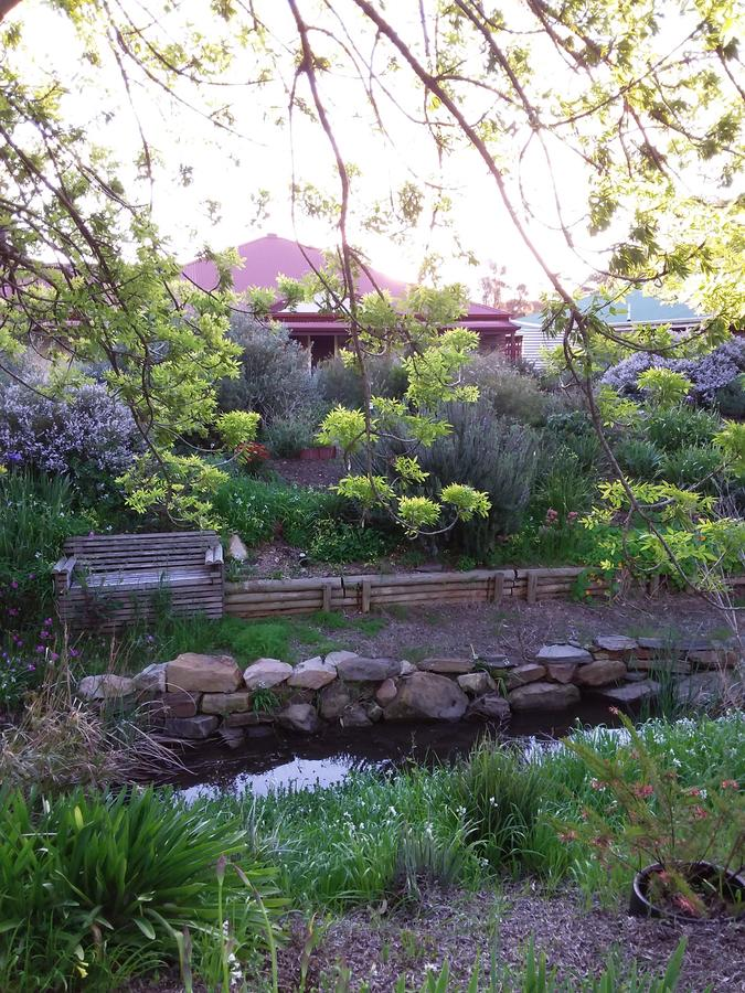 Frog Song at Willunga - Sydney Tourism