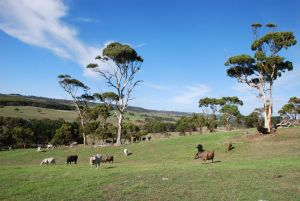 Lisieux Farm Bed and Breakfast - Sydney Tourism