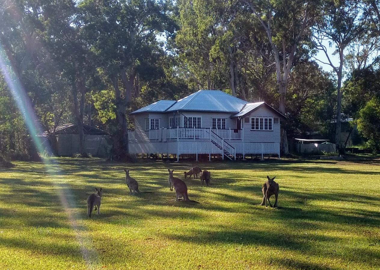 Lake Weyba Noosa Lodge  Kangaroos - Sydney Tourism